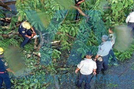 Cae enorme flamboyán sobre un auto en la avenida 128