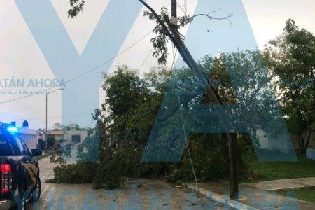 Bendita lluvia… pero que no tire árboles