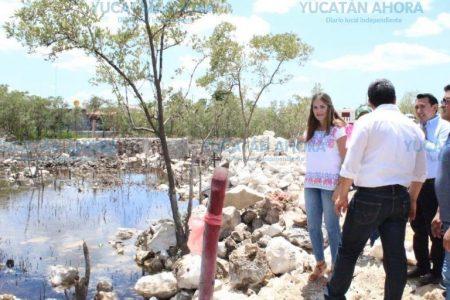 Denuncian al municipio de San Felipe por devastación de manglares