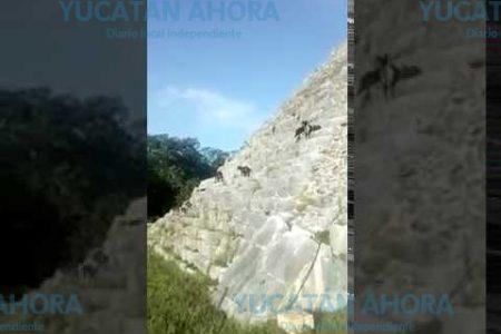 En marcha 'Operación rescate de los perritos de Kukulcán'