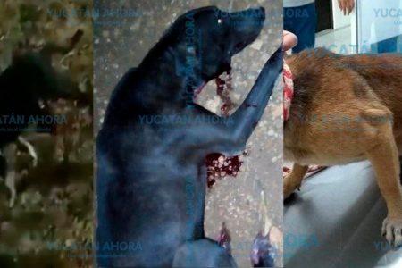 Largo recuento de casos de maltrato animal en Yucatan en 2019