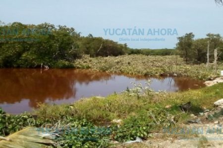 San Felipe, sin dinero para pagar millonaria multa por destruir manglar