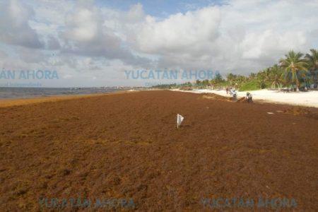 Trasladan a turistas a playas no afectadas por el sargazo del Caribe