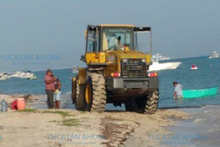 Empresario mete trascabo a la playa de Uaymitún y mata crías de tortuga