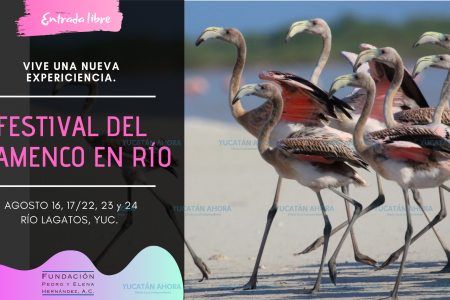 Disfruta de Río Lagartos con en el Festival del Flamenco en Río