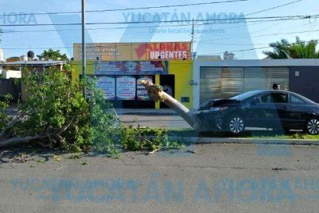 Enfiestado conductor derriba árbol en Francisco de Montejo