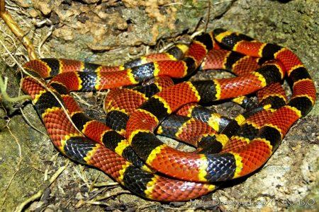 Durante la canícula, casi la mitad de los ataques de serpientes