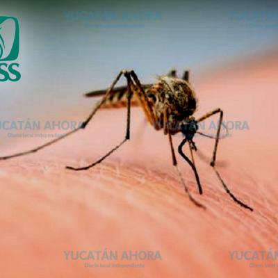 El dengue se mantiene a raya en Yucatán