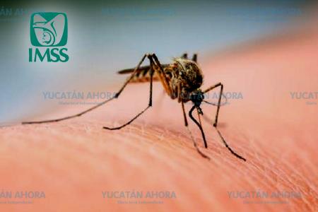 El dengue empieza a ceder, un caso cada 12 horas