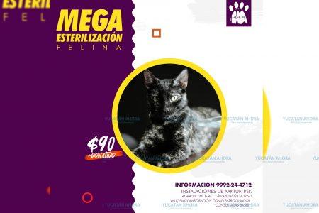 Invitan a mega esterilización felina con bajo costo