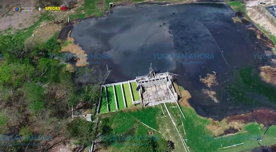 Exigen frenar la instalación de granjas porcícolas en Yucatán