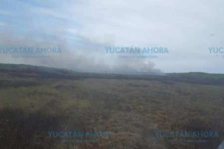 Detectan incendio en reserva El Palmar de Celestún