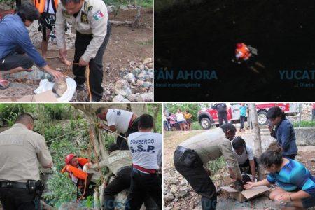Rescatan de un cenote a 'Cosita' y 'Osita': ahora buscan hogar