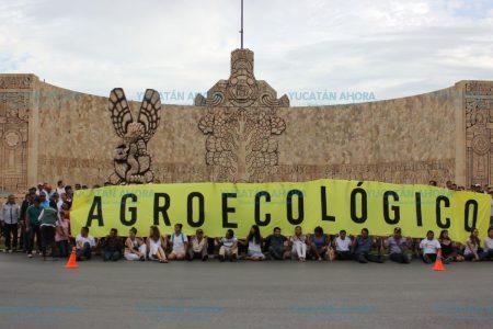 Preocupa anulación de decreto contra  transgénicos en Yucatán