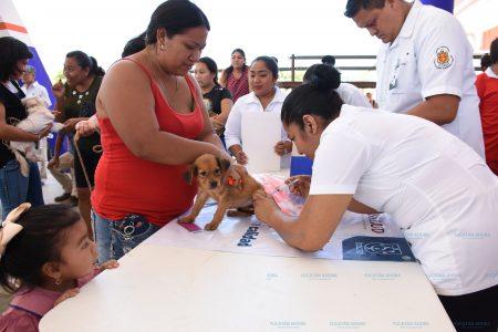 ¿Aún no vacunas a tu mascota contra la rabia?