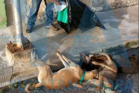 Indigna cruel envenenamiento de perros en Sol Caucel