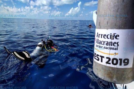 Síndrome blanco también está matando corales en Arrecife Alacranes