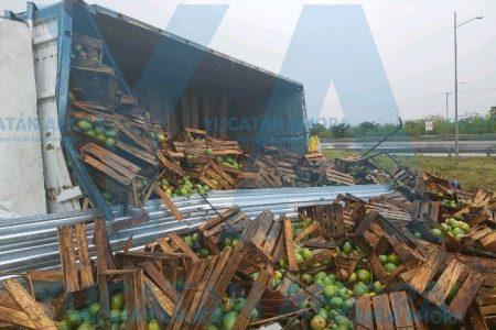 Vuelca tráiler con toneladas de mango y aguacate, en el Periférico