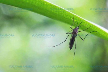 El dengue comienza a salirse de control en Yucatán