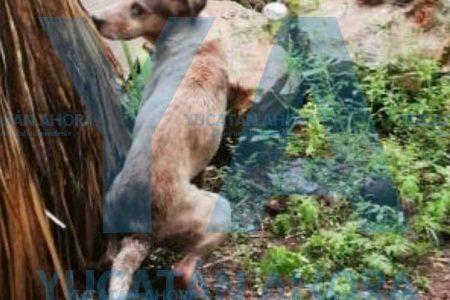 Bomberos rescatan un perrito que cayó a un pozo