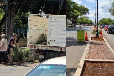 Retiran plantas de Paseo de Montejo por el Concierto por la Paz