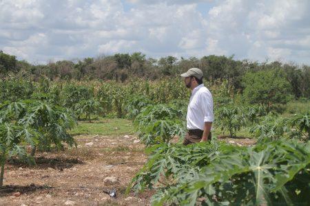 Más producción y menos huella ecológica, la apuesta para el campo