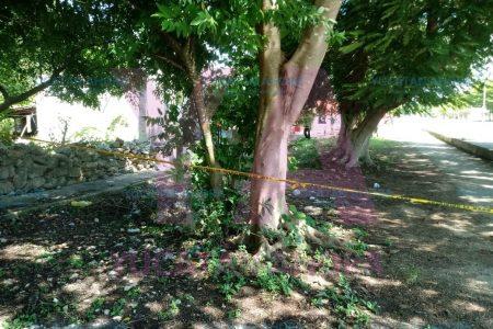 Alebrestadas abejas atacan gente en el sur de Mérida