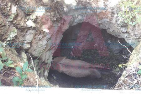 Rescatan un caballo que cayó a un pozo seco