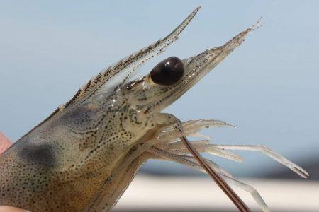 Con biotecnología la UNAM mejora la acuacultura en Yucatán