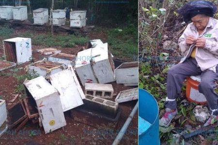Por robarle unos tubos le destruyen su apiario a productor de 78 años