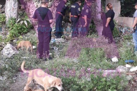 Otro rescate animal: ahora un perro cayó a un pozo en Acanceh
