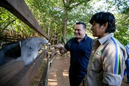 Nando el tapir anda en busca de novia; ya le echó el ojo a una de Xcaret