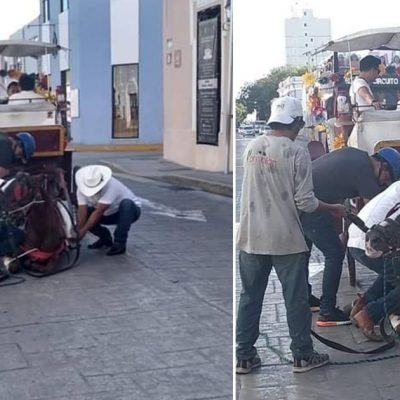 Mancha de diésel hizo caer a un caballo calesero: ahora está descansando