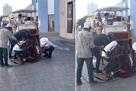 Cae otro caballo calesero en el Centro de Mérida