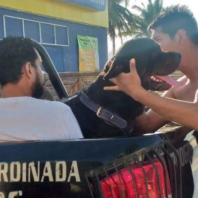 Rottweiler ataca a un niño de tres años en el malecón de Progreso