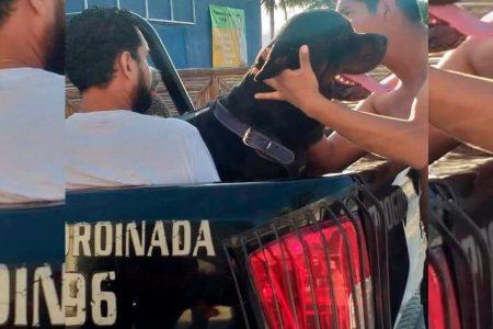 Dueño del perro pagará las curaciones del niño atacado en el malecón y se disculpará