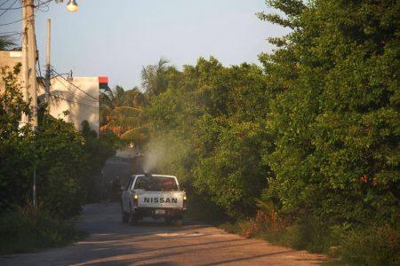 Atípica temporada: reportan primera defunción por dengue ¡en diciembre!
