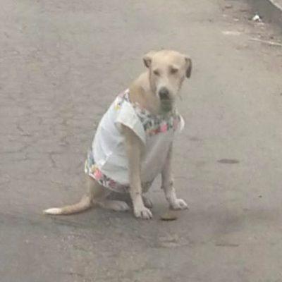 Polita, la perra con hipil yucateco que conquista las redes sociales