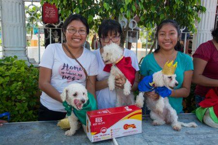 Perrita mestiza gana cetro en concurso de mascotas