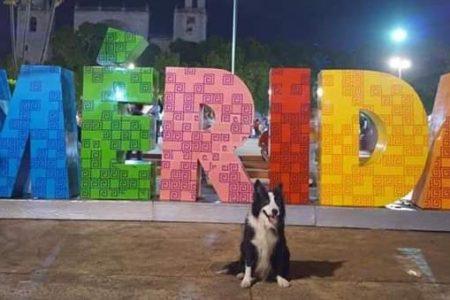 ¡Ya apareció Newton!, el perro rescatista, sano y salvo