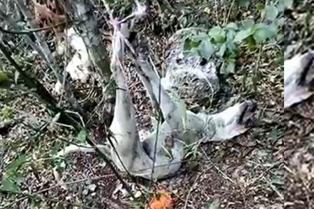 Tortura animal: cuelgan de cuatro patas a una perrita y la abandonan en el monte