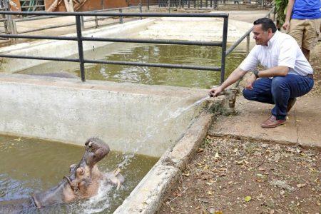 El Centenario estrenará hospital veterinario este año