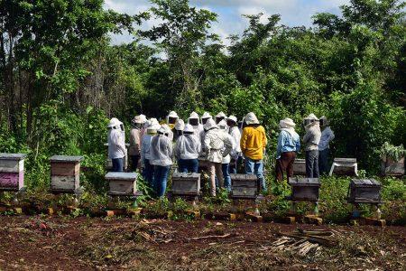 Nuevos proyectos endulzan el panorama de la miel en Yucatán