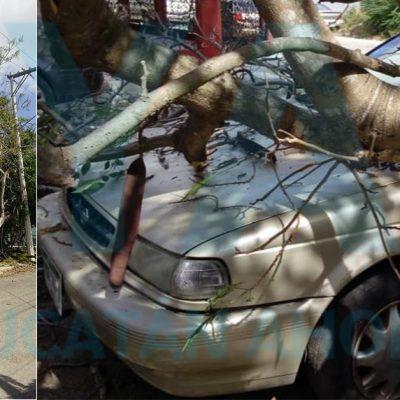 Cae enorme Flamboyán sobre un auto y deja sin luz al fraccionamiento Jardines de Miraflores