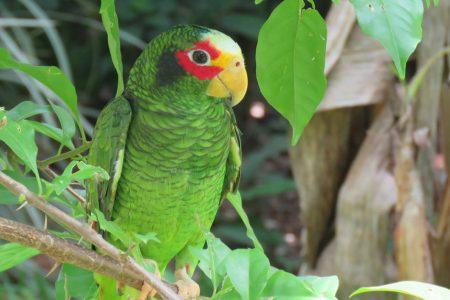 Vacíos legales y apatía de las autoridades brindan alas a traficantes de aves
