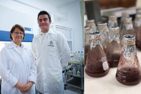 Pitaya, una alternativa a los colorantes sintéticos