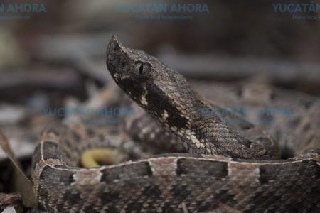 Las víboras siguen sueltas: 2019 fue un año histórico en ataques de serpientes