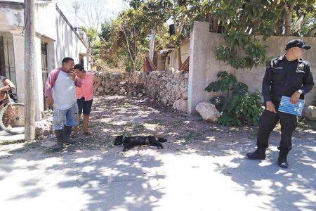 Asesinan de un balazo a un perro en Izamal