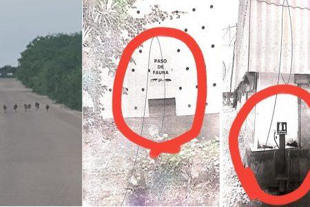 Denuncian a cementera por construir un muro ilegal en zona de frágiles ecosistemas