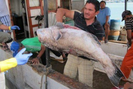 Adelantan pago de apoyos para pescadores por la Veda del Mero 2020